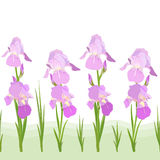 Iris flowers pattern Stock Photography