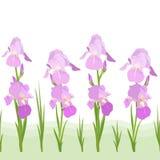 Iris flowers pattern. Lght-purple iris flowers repeating pattern Stock Photography