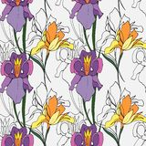 Iris flowers royalty free illustration
