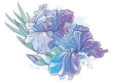 Iris flowers vector illustration. Vector illustration of Iris flowers, imitation of watercolor Royalty Free Stock Image