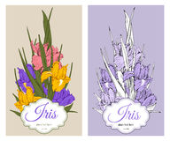 Iris flowers Royalty Free Stock Photos