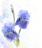 Iris Flowers Watercolor Royalty Free Stock Images