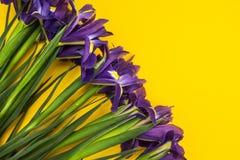 Iris flowers on a yellow background stock photos