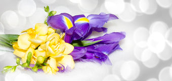 Iris and freesia flower illustration royalty free stock images