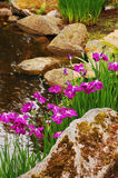 Iris garden Royalty Free Stock Photography