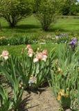 Iris Garden Immagine Stock Libera da Diritti