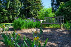 Iris Garden and Bench Stock Photos