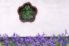 Iris garden Stock Image