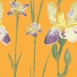 Iris graphic pattern Royalty Free Stock Photo