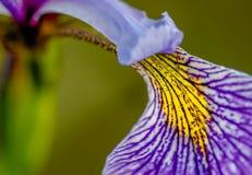 Iris The Greek Goddess Of der Regenbogen Lizenzfreie Stockfotos