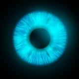 Iris of the human eye Royalty Free Stock Images
