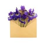 Iris i kuvertet Arkivfoto