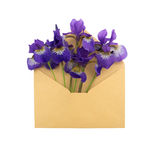 Iris im Umschlag Stockfoto