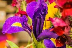 Iris imperfecto Fotos de archivo