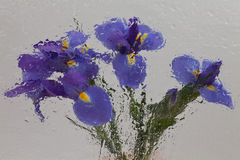 Iris impressionistic. Five iris photographed through wavy glass with water Stock Image
