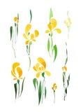 Iris jaune d'isolement sur le fond blanc Images libres de droits