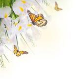 Iris jaunes avec les marguerites jaunes Image libre de droits
