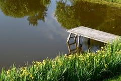 Iris jaunes fleurissant près de l'étang Images libres de droits