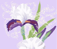 Iris on Light Blue Background Royalty Free Stock Images
