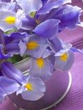 Iris lowers Royalty Free Stock Photos