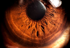 Iris. Macro photography of human eyeball Royalty Free Stock Image