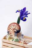 Iris, Nautilus Shell, Essential Oils, Spa Treatment Royalty Free Stock Image