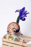 Iris, Nautilus Shell, Essential Oils, Spa Treatment. On White Background Royalty Free Stock Image