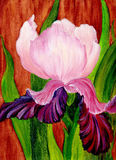 Iris. Oil painting. On canvas stock illustration