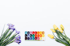 Iris púrpuras, tulipanes amarillos y pintura de la acuarela en el backg blanco Foto de archivo libre de regalías