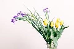 Iris púrpuras y tulipanes amarillos en un florero en un fondo beige Imagen de archivo libre de regalías