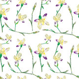 Iris pattern Royalty Free Stock Photos