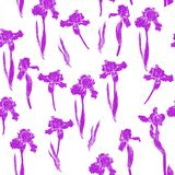 Iris pattern violet. Hand drawn iris flowers on background. Trendy floral seamless pattern as textile, wrapping paper, wallpaper, backdrop and so on Royalty Free Stock Images