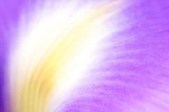 Iris petal Stock Image