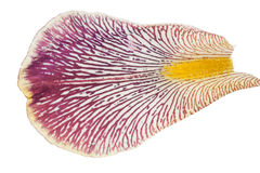 Iris petal. Macro royalty free stock photography