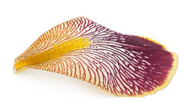 Iris petal Royalty Free Stock Photography