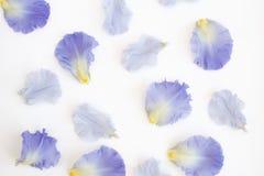 Iris Petals porpora decostruita fotografie stock