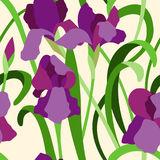 Iris pourprés illustration stock