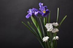 Iris pourpres sur un fond noir Photo stock