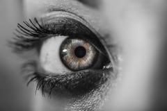 Iris puissant Photos libres de droits