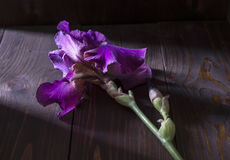 Iris. Purple iris lies on a wooden table Stock Images