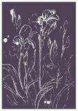 Iris que crecen en el jardín bosquejo libre illustration