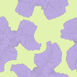 Iris seamless background. Royalty Free Stock Photos