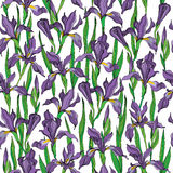 Iris seamless vector pattern. Vector seamless wallpaper pattern of iris flowers Royalty Free Stock Photos
