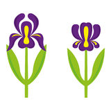 Iris. A set of iris illustrations Stock Photos