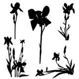 Iris silhouettes series Stock Photos