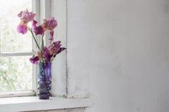 Iris in vaas op vensterbank Stock Afbeelding