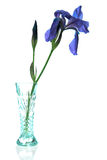 Iris Vase Royalty Free Stock Photography