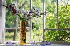 Iris in vase on windowsill. Iris in vase on old windowsill royalty free stock photo