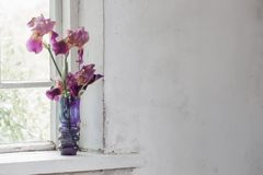 Iris in vase on windowsill Stock Image