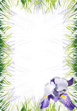 Iris violet (vector). Page with an illustration of a flower the Iris. Holiday card or the invitation Royalty Free Stock Photo